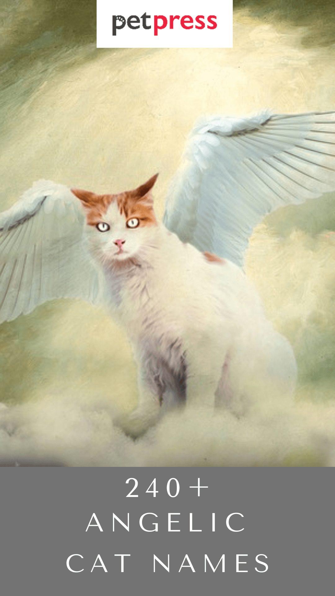 angelic-cat-names