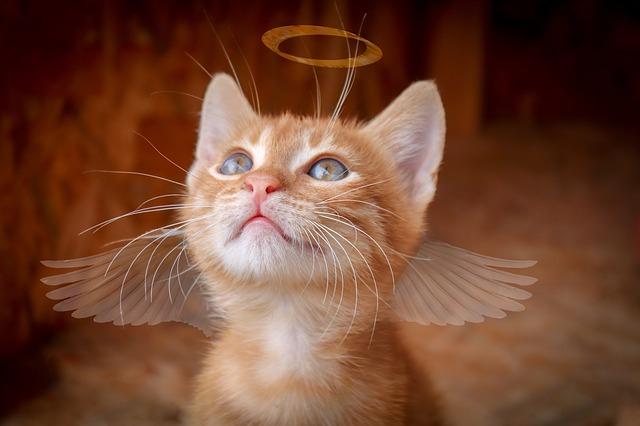 angelic-female-cat-names