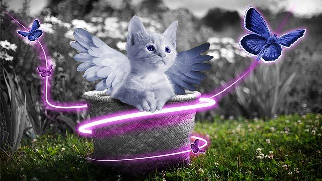 angelic-unisex-cat-names