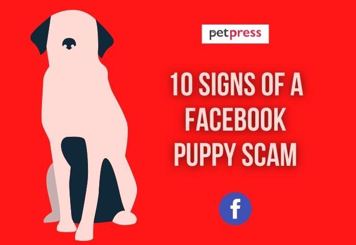 facebook puppy scam