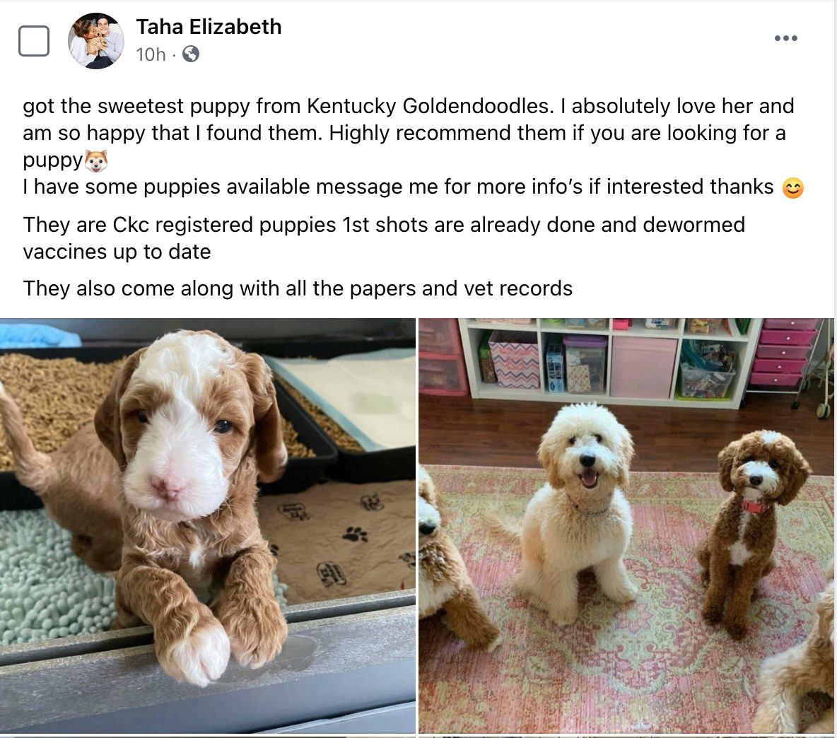 What Facebook puppy scam post may look like