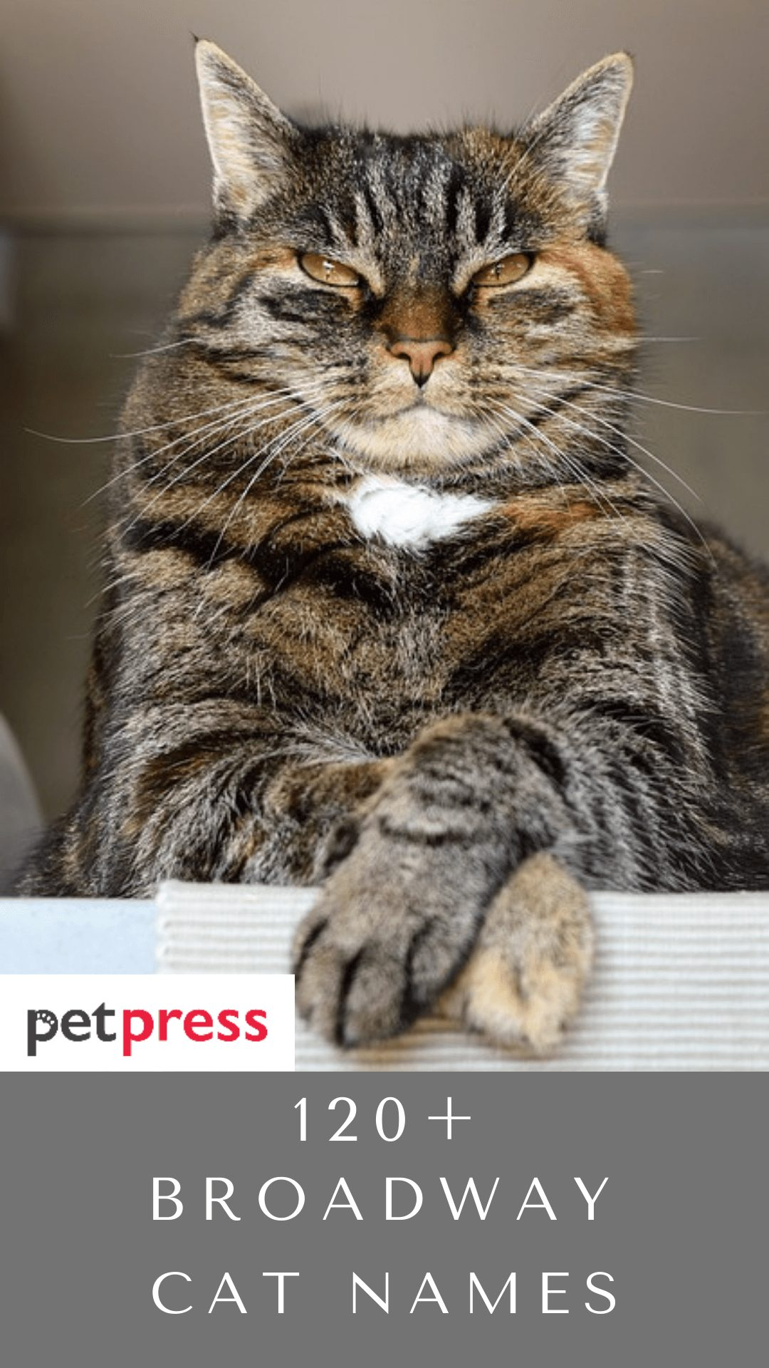broadway-cat-names