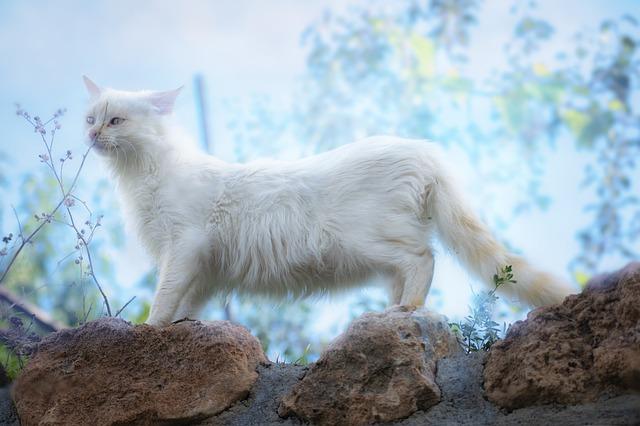 female-broadway-cat-names