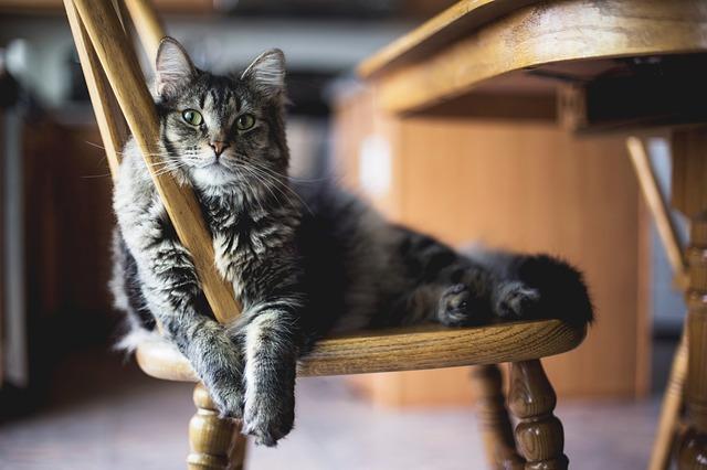 male-broadway-cat-names