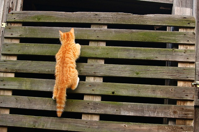 unique-broadway-cat-names