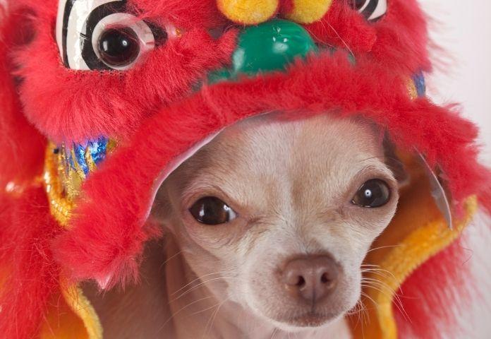 Female Dragon Ball Z dog names