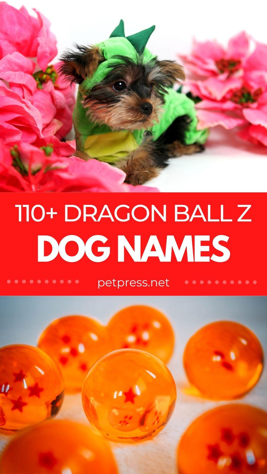 dragon ball dog names