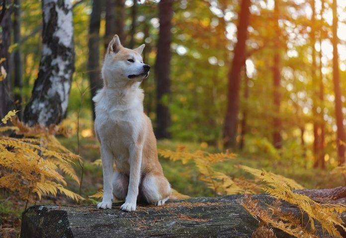 Male Naruto-Inspired Dog Names