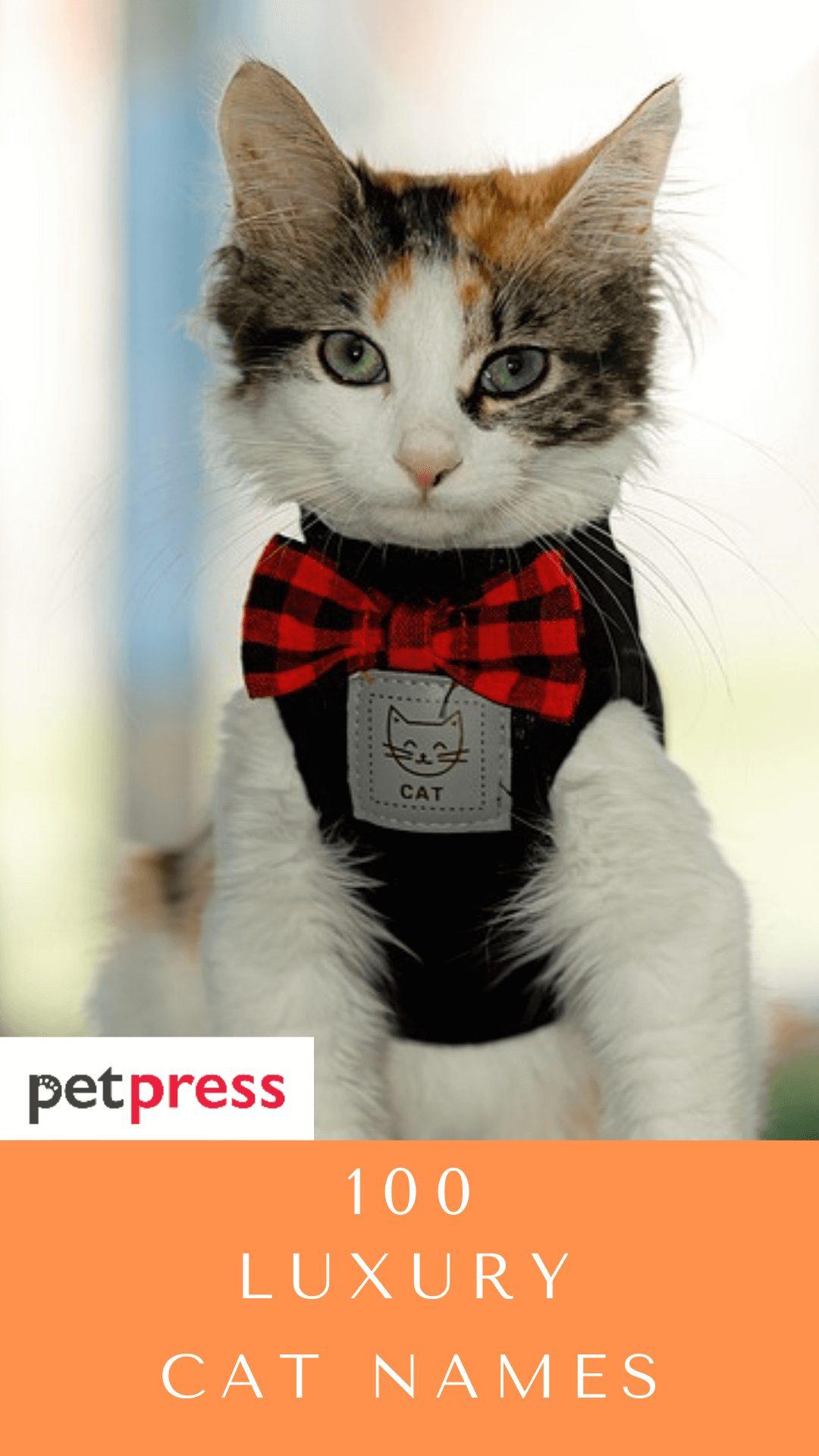 luxury-cat-names