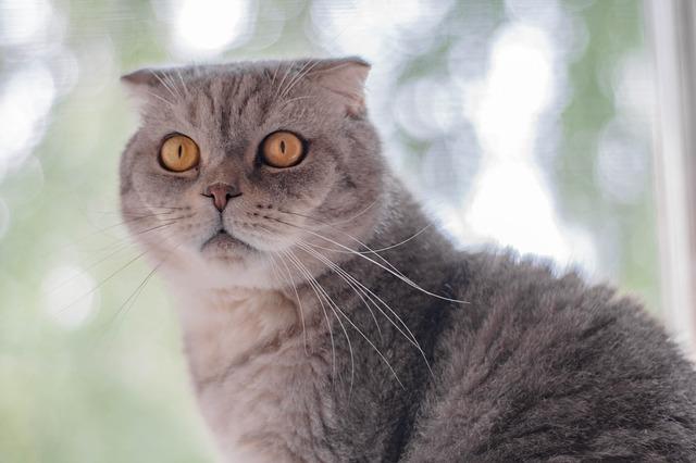 luxury-male-cat-names