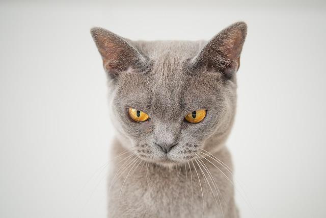 best-warrior-cat-names