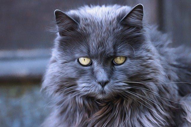 unique-warrior-cat-names