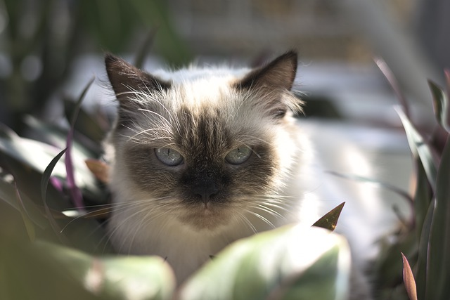 cute-warrior-cat-names