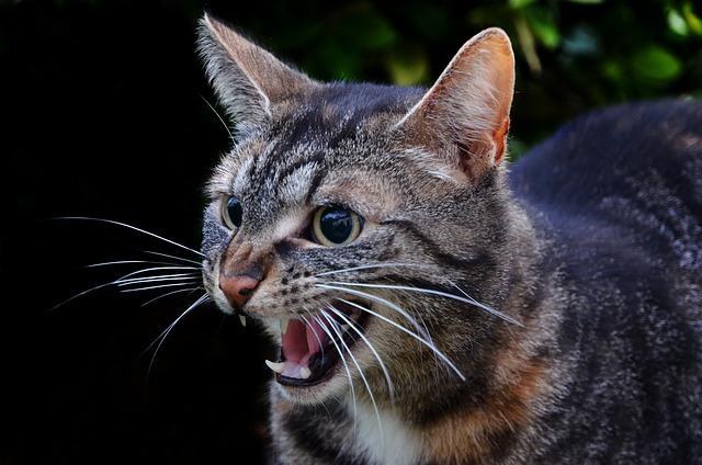 clan-warrior-cat-names