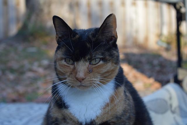 rogue-warrior-cat-names