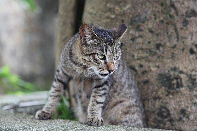 pretty-warrior-cat-names
