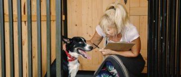 Dog Owners Return to Work in UK, Demand for Dog Daycare Skyrockets