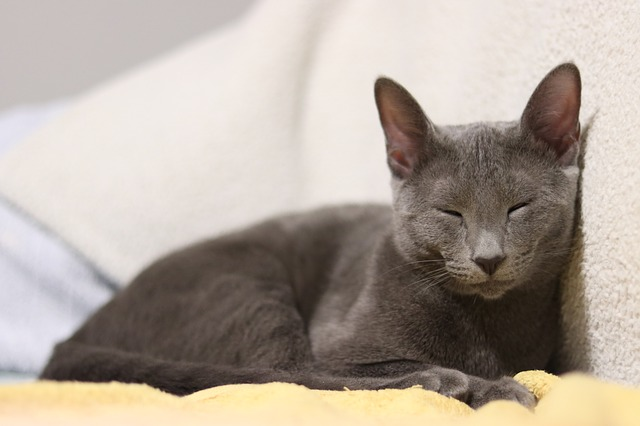 boy-stoner-cat-names