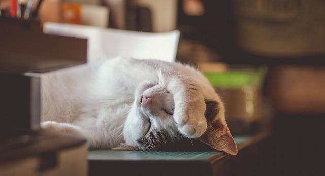 funny-stoner-cat-names