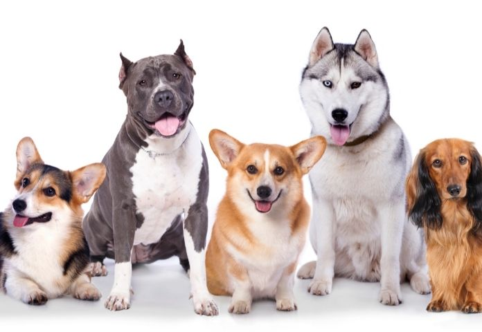 Trupanion Releases Most Popular Dog Names and Breeds for 2021