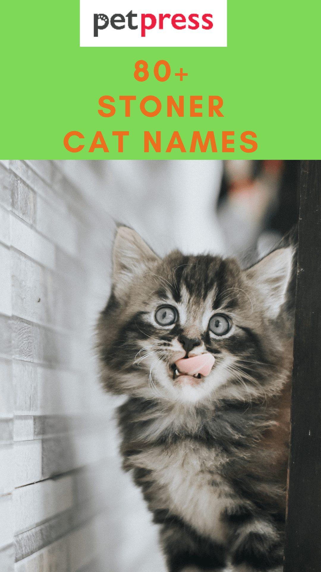 stoner-cat-names