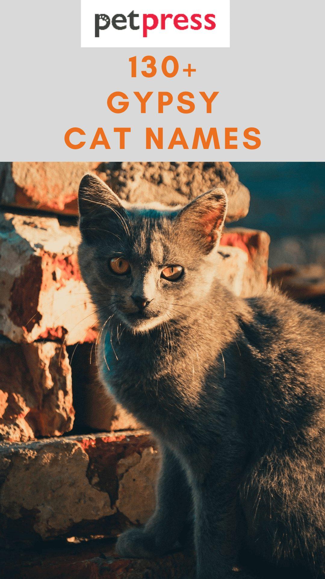 gypsy-cat-names