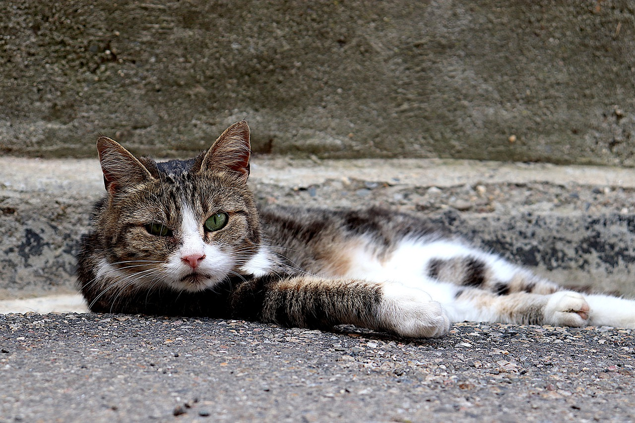 male-gypsy-cat-names