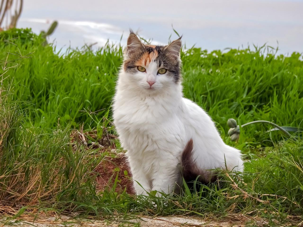 female-gypsy-cat-names