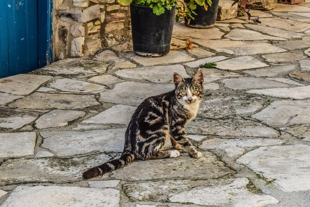 roman-gypsy-cat-names