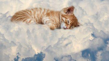 female-heavenly-cat-names