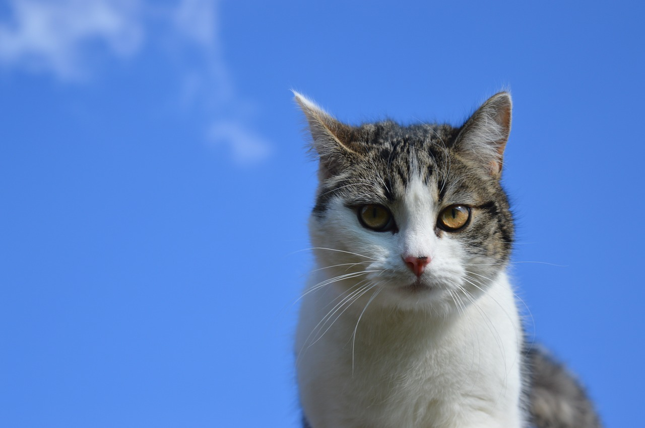 male-heavenly-cat-names
