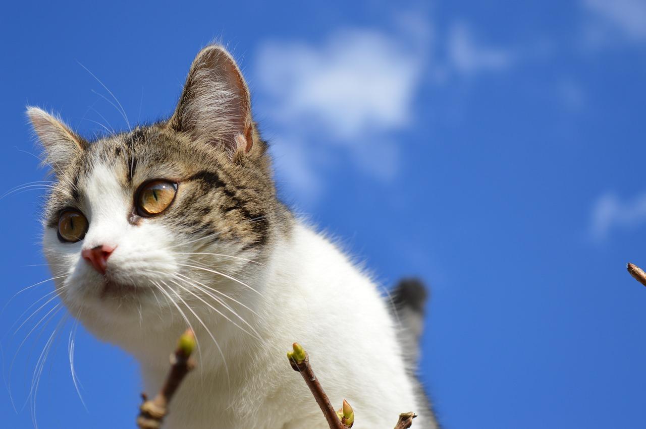 unisex-heavenly-cat-names