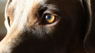 10 Ways to Celebrate National Pet Memorial Day 2021