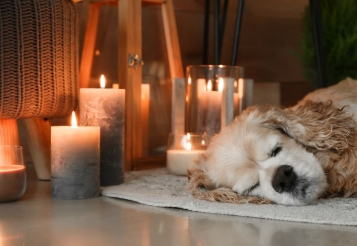 Honor your Dog by Lighting Candles