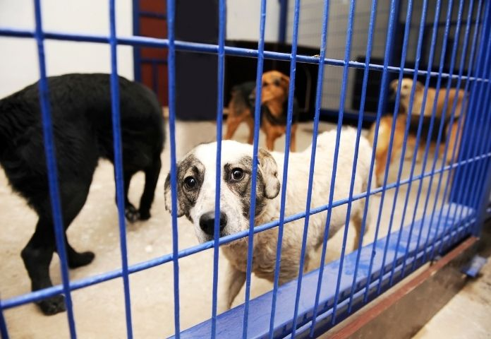Make a Donation to Dog Shelters and Animal Rescue Centers