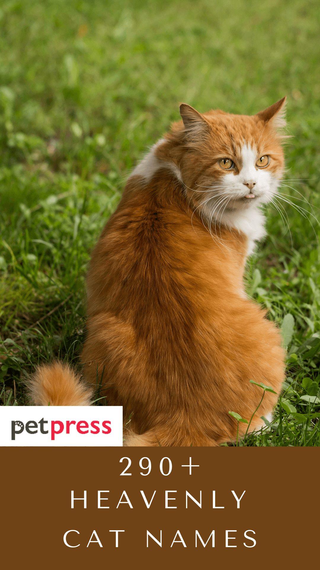 earthy-cat-names