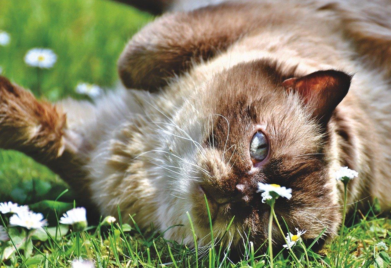 male-earthy-cat-names