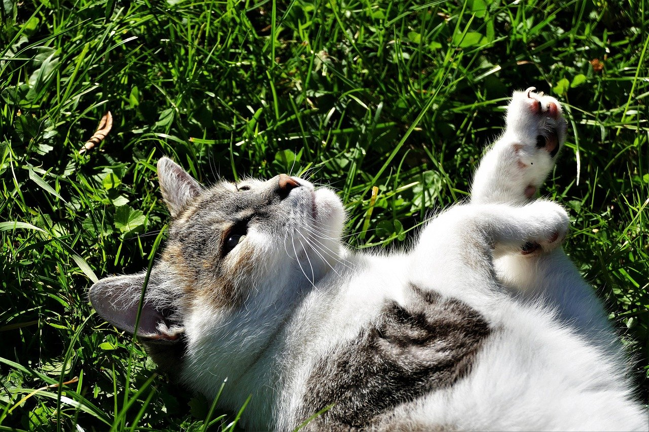 female-earthy-cat-names