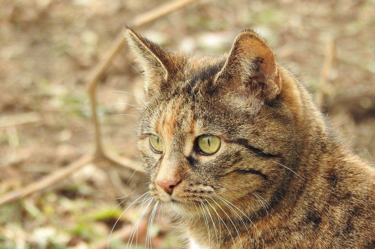 unisex-earthy-cat-names