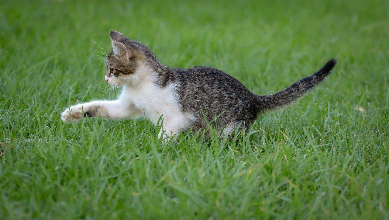 cute-earthy-cat-names