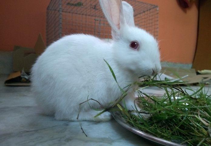 Female Kannada Rabbit Names