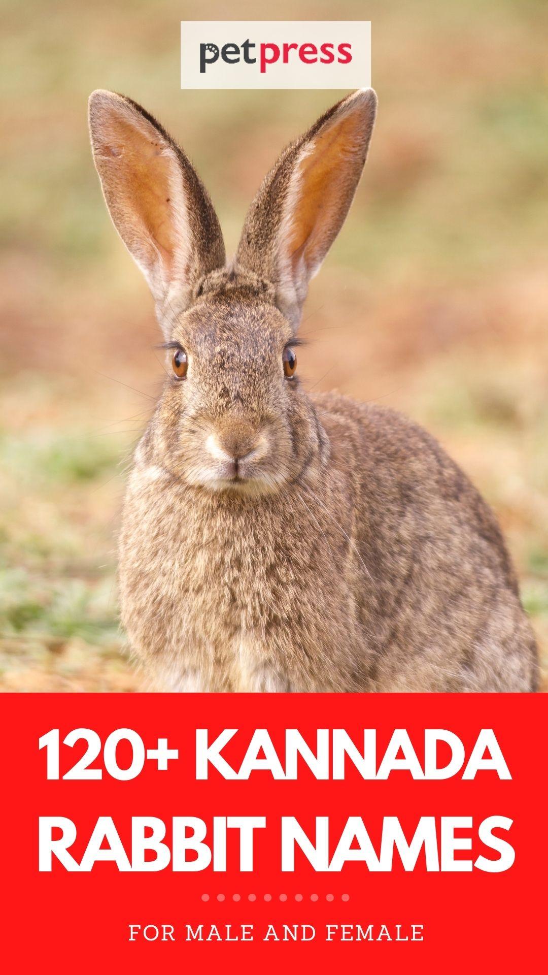kannada rabbit names