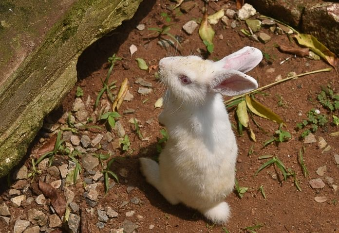 Female Hindi Rabbit Names