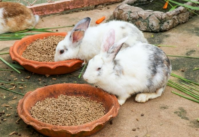 Best 130+ Hindi Rabbit Names with Meanings