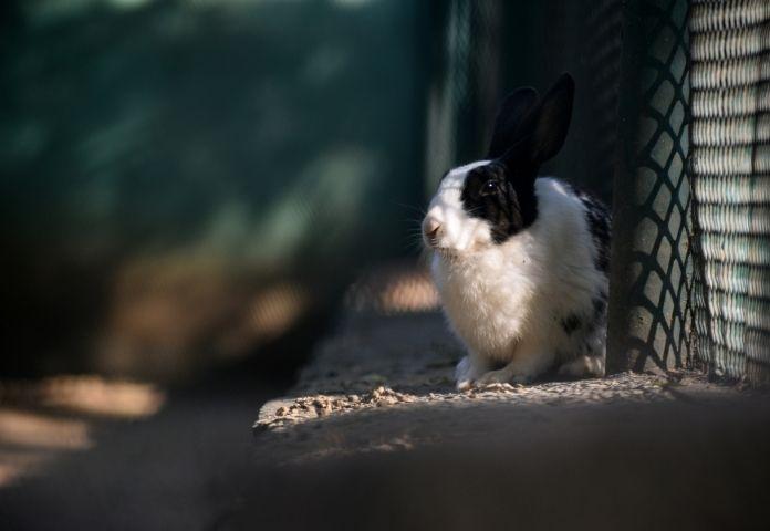 Cute Rabbit Names in Hindi-2
