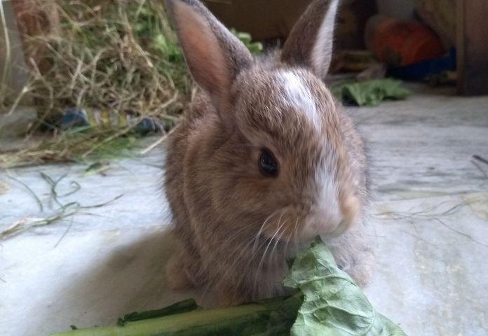 Male Hindi Rabbit Names