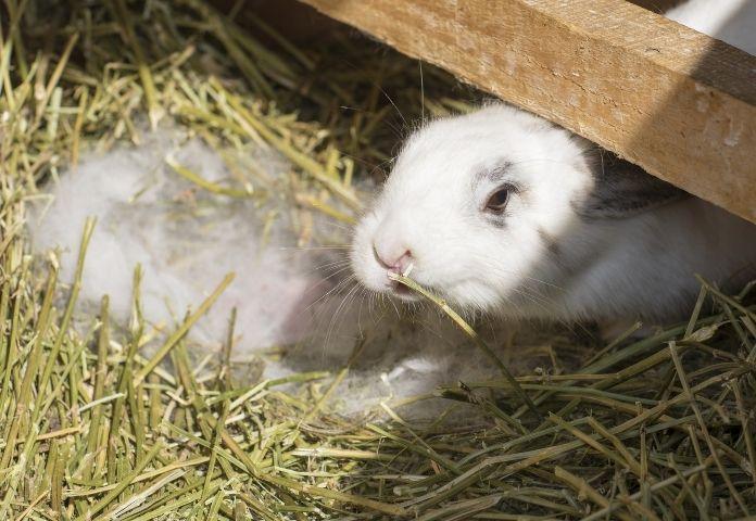 Cute Rabbit Names in Hindi