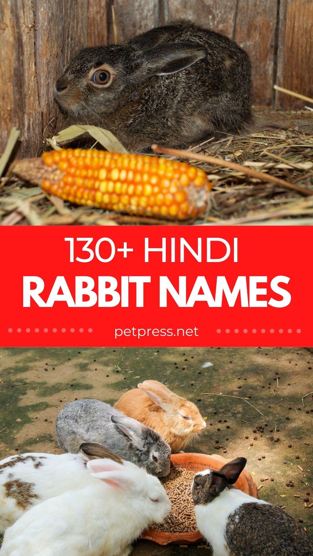 hindi rabbit names
