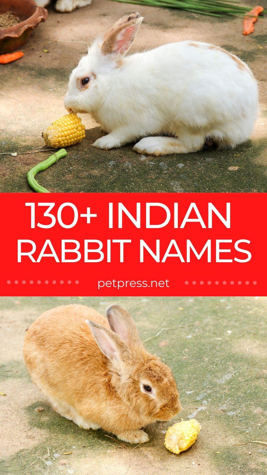 indian rabbit names for naming a pet rabbit