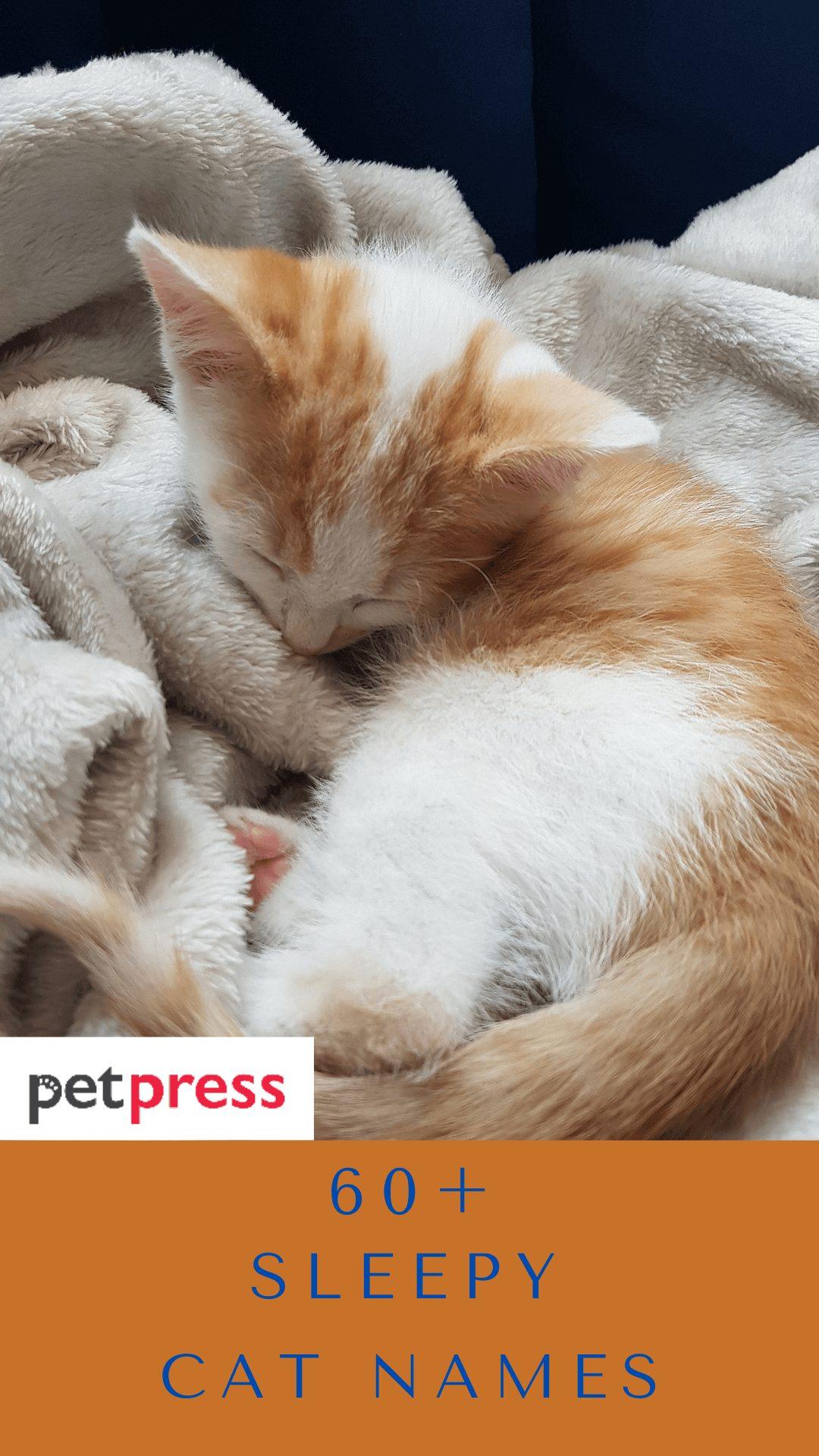 sleepy-cat-names